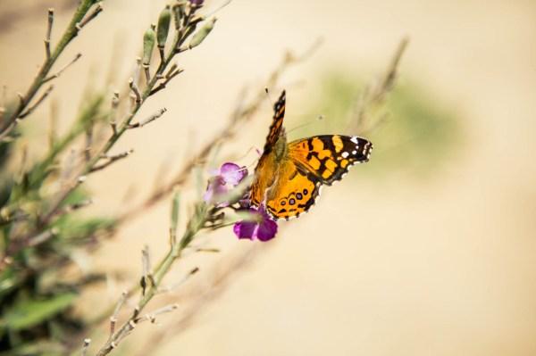 butterfly [2013]
