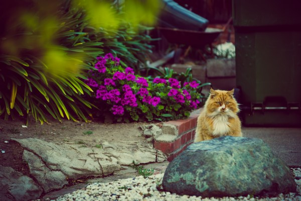 cat in yard | photograph by Brian J. Matis