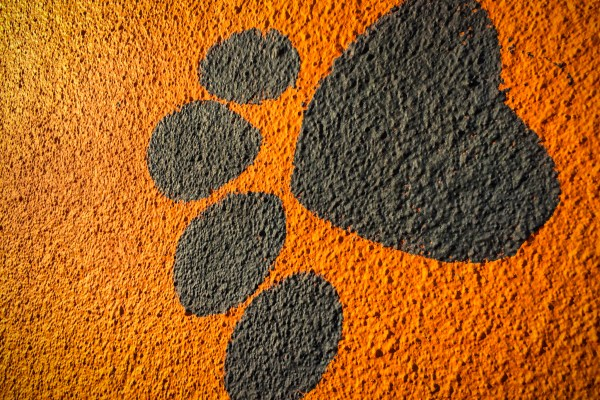paw print painted on orange wall