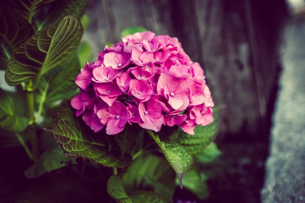flowers   photograph by Brian J. Matis