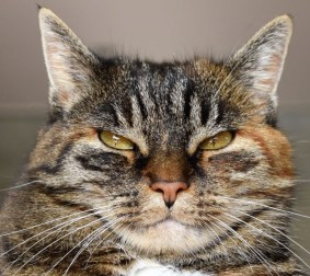 Image result for cat stink eye