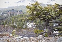 Banff-springs-hotel-tree Brian Miller