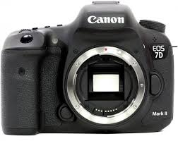 Canon wildlife photography camera