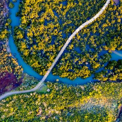 Swamp Track - Aerial Artwork