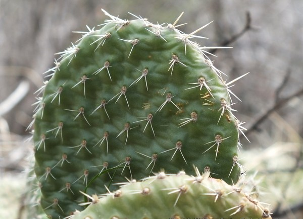 Cactus at the Garden of the Gods