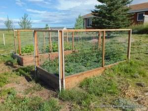 Rabbit fence around vegitable garden