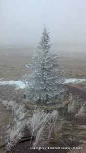Frost on tree