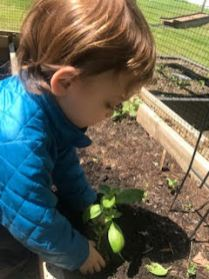 Planting with 2's 2