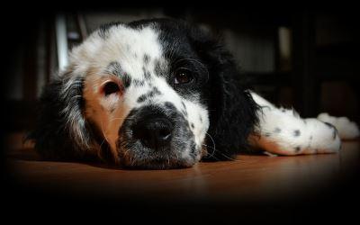 Cucce per cani in offerta: Charlie spanker