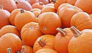 pumpkin-choose