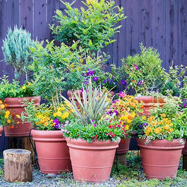 pot jardinieres bac potager bricomarche
