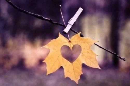 hoja corazón
