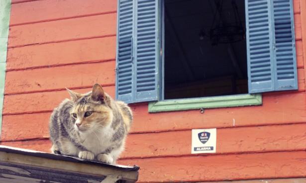 Cat in La Boca, Buenos Aires