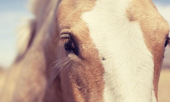 Horse outside Cafayate