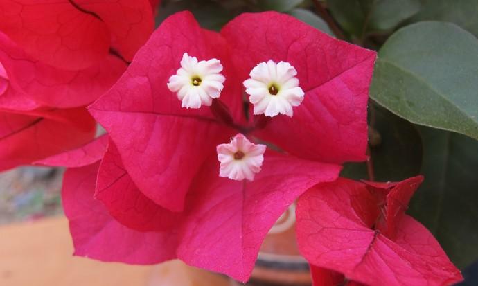Smiling flower