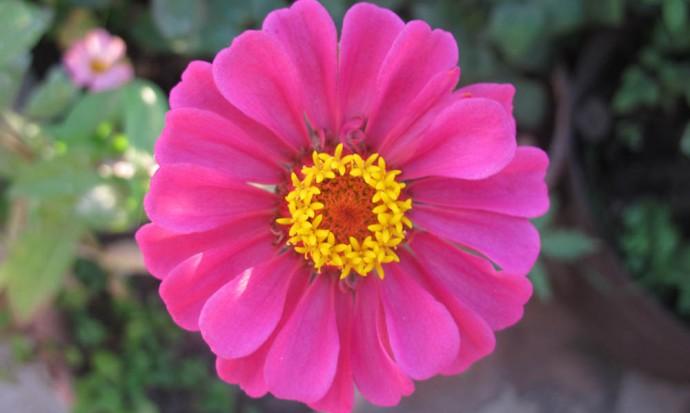 Yellow wreath flower
