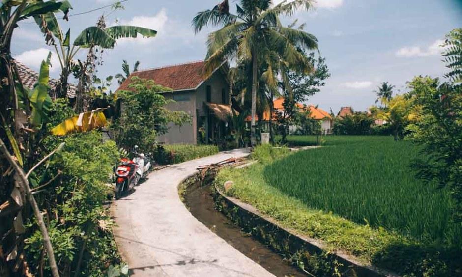 Rice fields in Penastanan