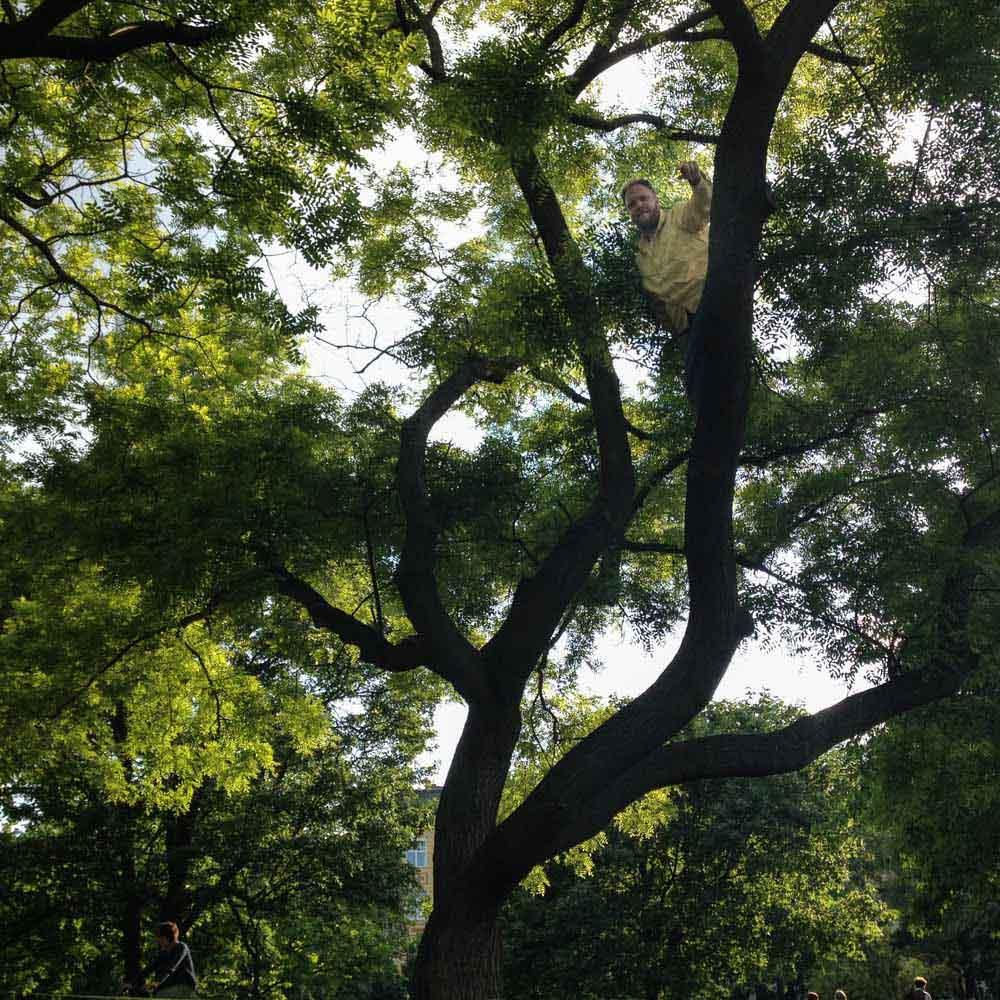 Max stuck in a tree