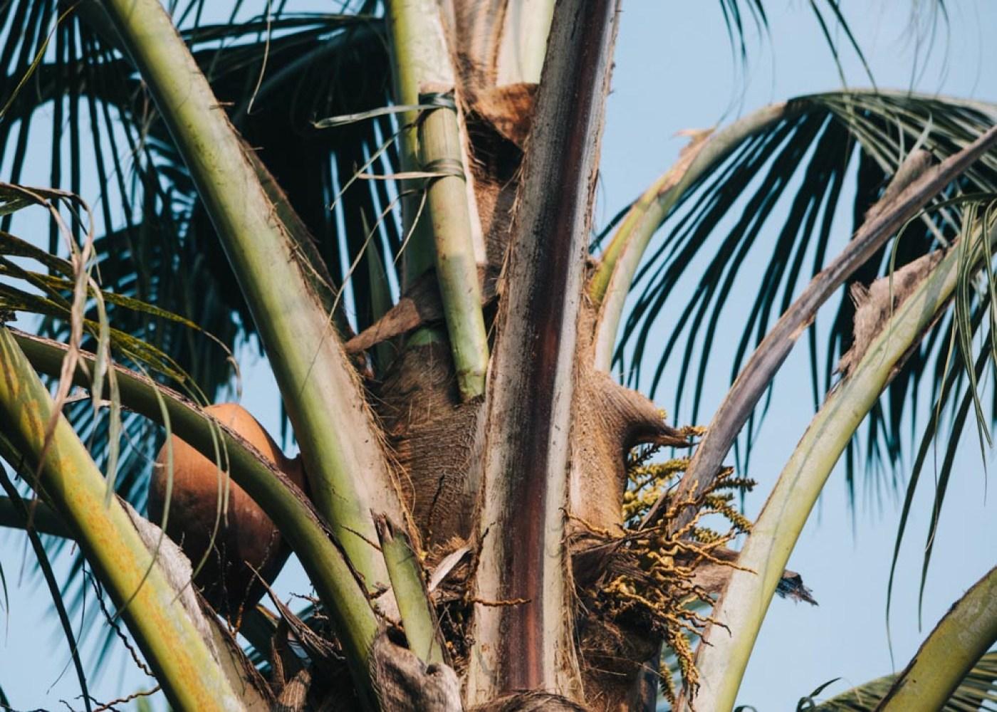 Greenpalms homestay - a special experience in Kerala