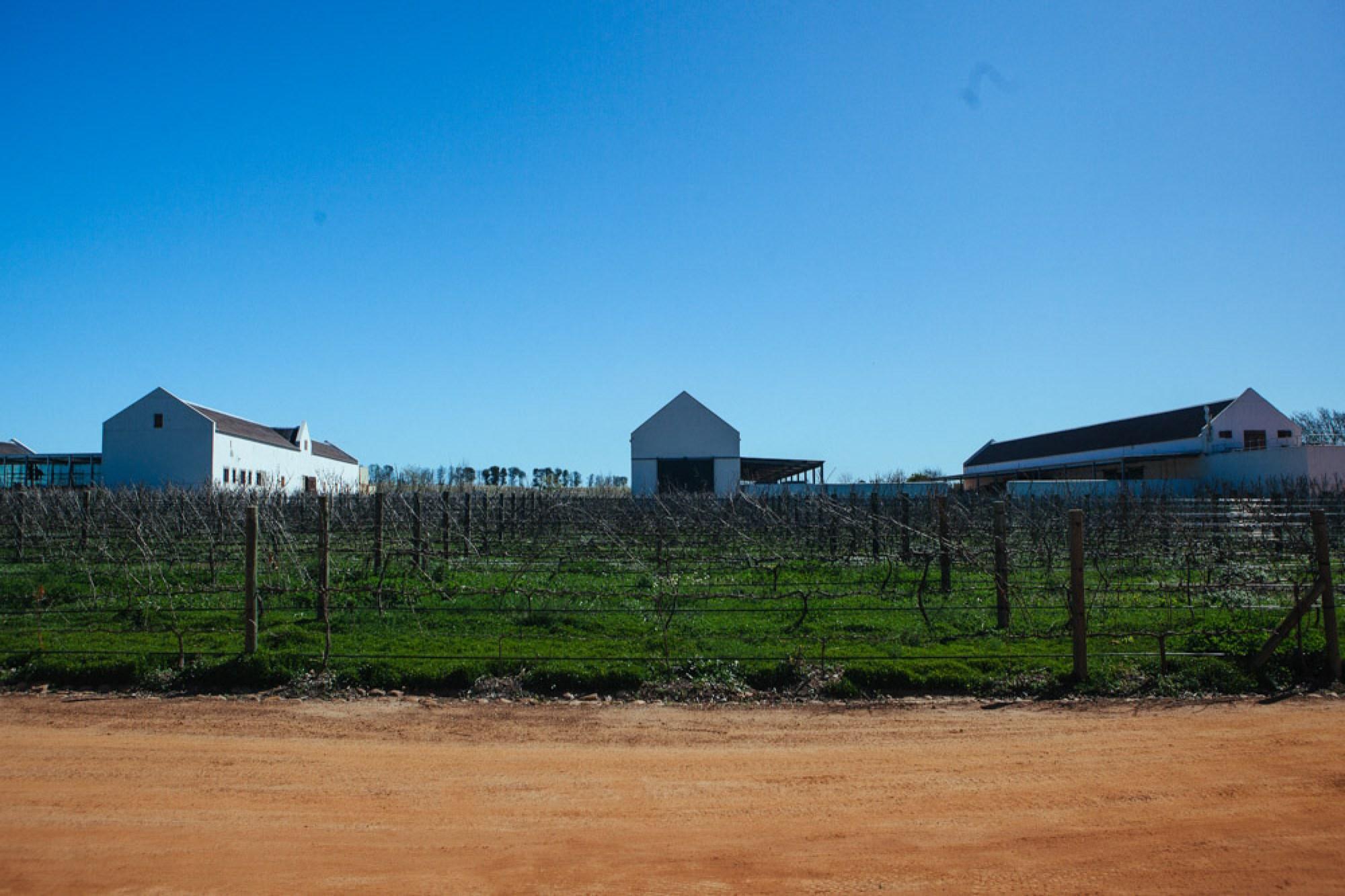 Best vineyard Babylonstoren