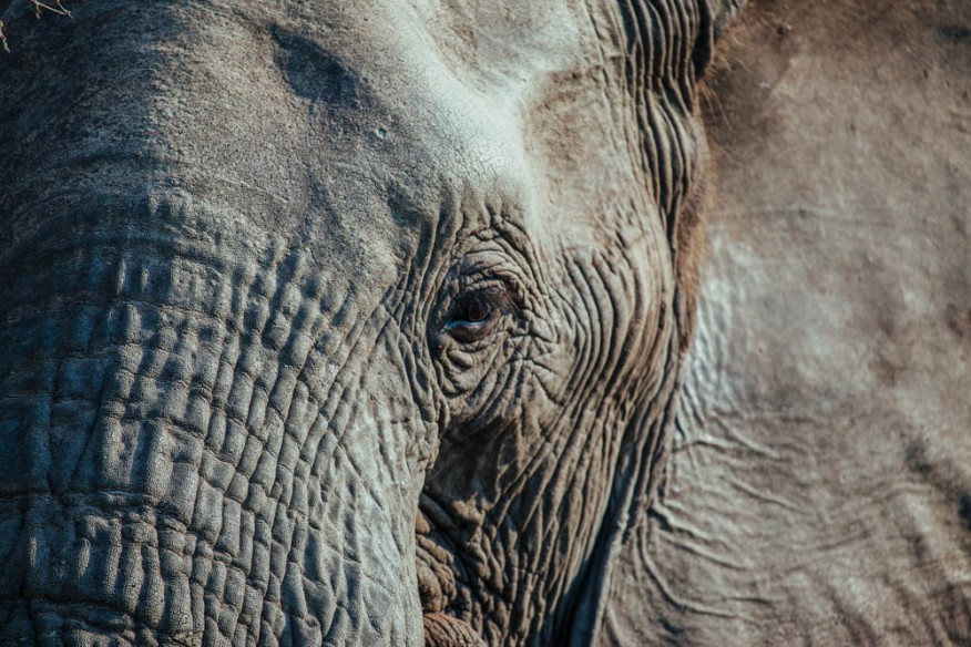 Elephant eye in Timbavati, South Africa