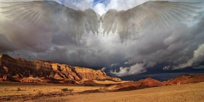 web-ss-timna-wings-504352195-johannes-rieble