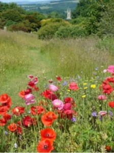 jellyfields_memorial_meadow