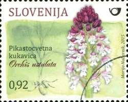 Orchidee Orchis ustulata auf slowenischer Briefmarke