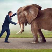 man holding back elephant