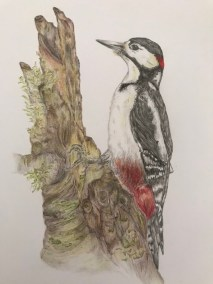 The Drumming Woodpecker by Georgina Duncan