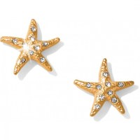 Aqua Shores Aqua Shores Starfish Post Earrings Earrings