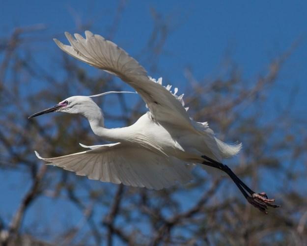 Birdwatching Umbria Italy
