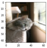 Logistic regression training sample - cat