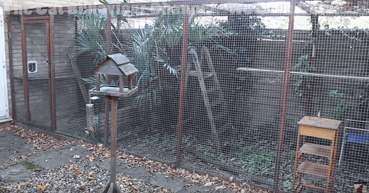 Video Get Some Clever Tips On Building A Catio