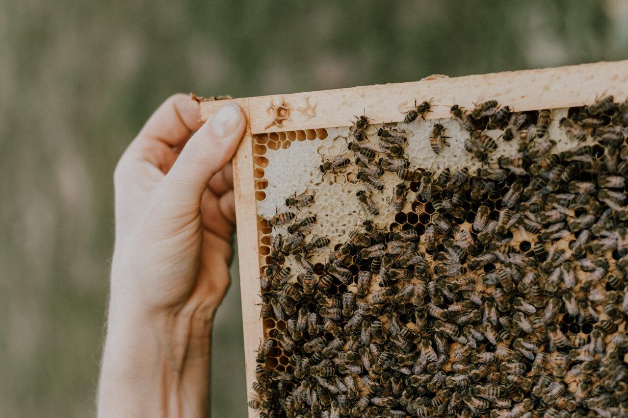 Nahaufnahme eines Bienenvolks
