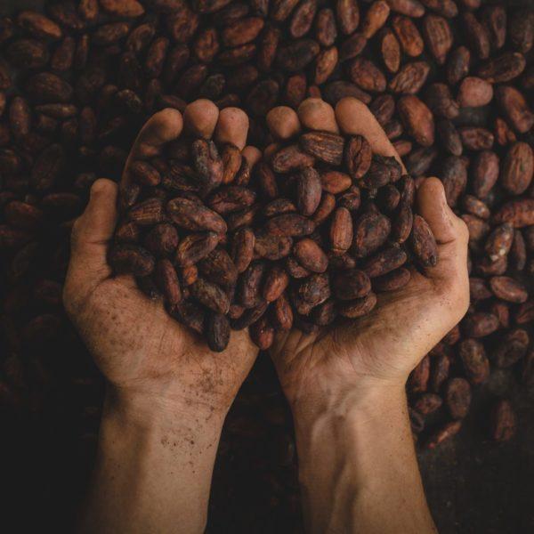 Pablo Merchan auf Unsplash Kakaobohnen Hände