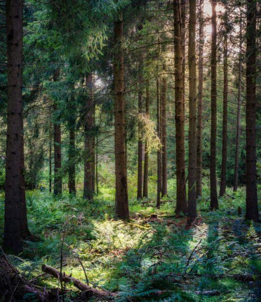 Wald Bäume Foto von daniel sessler auf unsplash