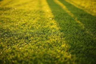 beautifullawn 300x200 - Do You Want a Healthy Lawn? Then Dethatch It