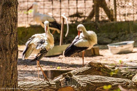zoo-chisinau-2015-193
