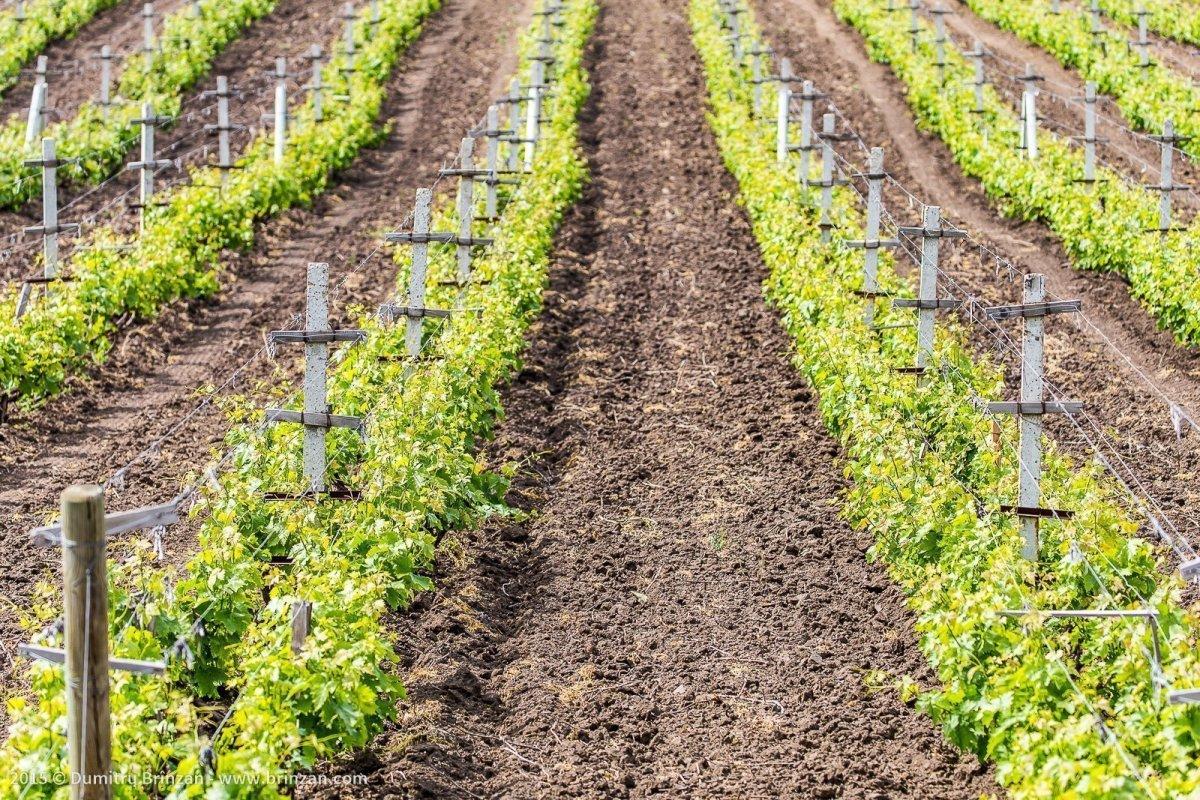 Purcari Estate - Vineyards
