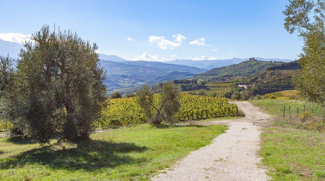 2016-podere-le-ripi-winery-montalcino-6-vineyard