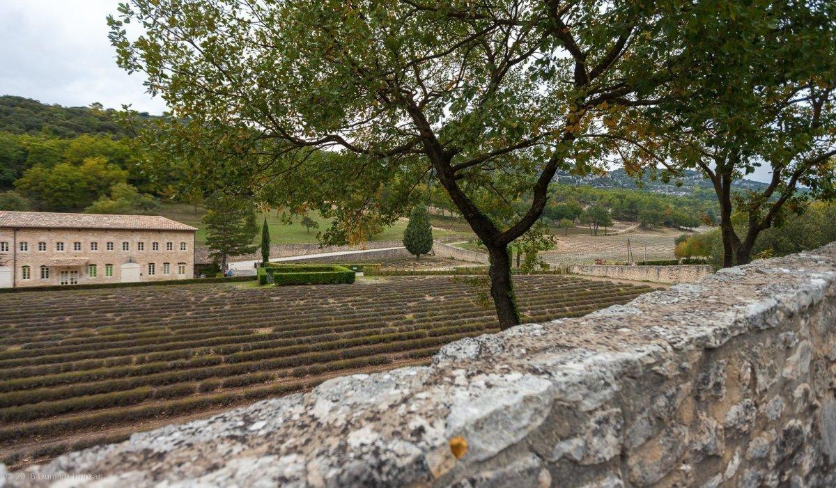 senanque-abbey-provence-france-18