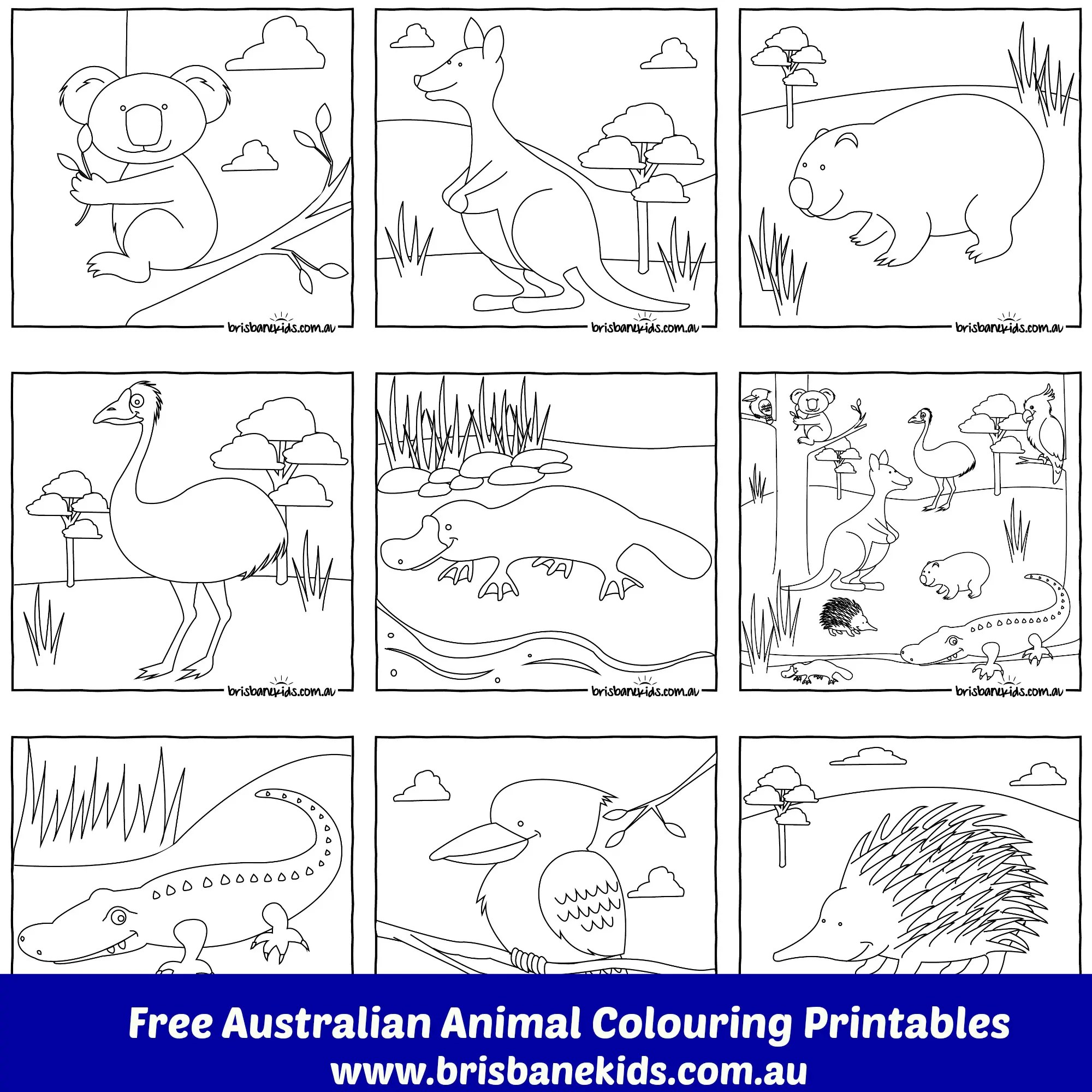 Australian Animals Colouring Pages Brisbane Kids