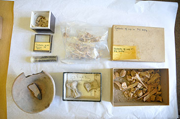 Image of some of the contents of the box