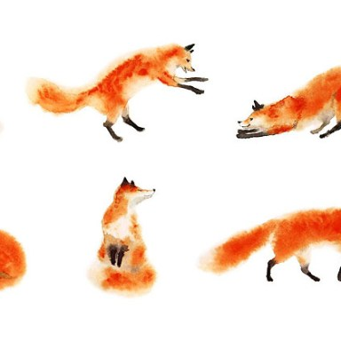 hand drawn pictures of foxes
