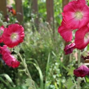 Family gardening (44)