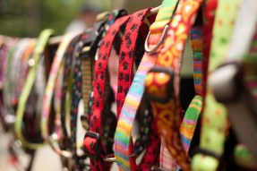 dog collars shlef shop colourful
