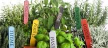 plants pots labels