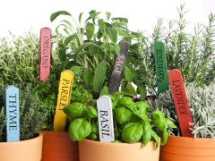 plants pots labels