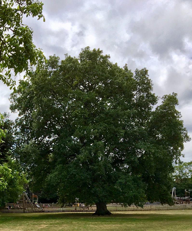 Stoke Lodge Lucombe Oak